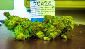 blueberry-kush