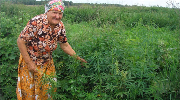 how to find wild weed