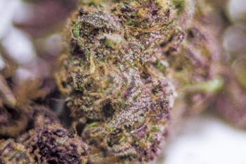 Purple Maui Marijuana