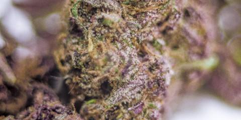 Purple Maui Marijuana