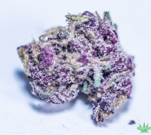 purple maui cannabis bud