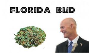 florida-bud