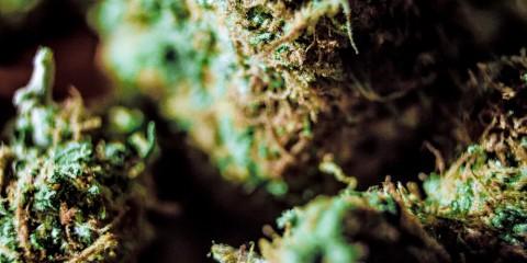 teen marijuana use