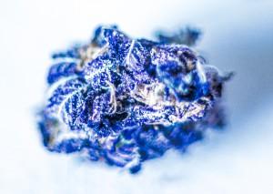 Purple-Fantasy-6