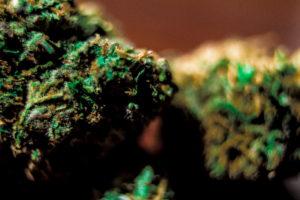 legalize-medical-marijuana