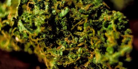 Butter OG - Bud Close-up